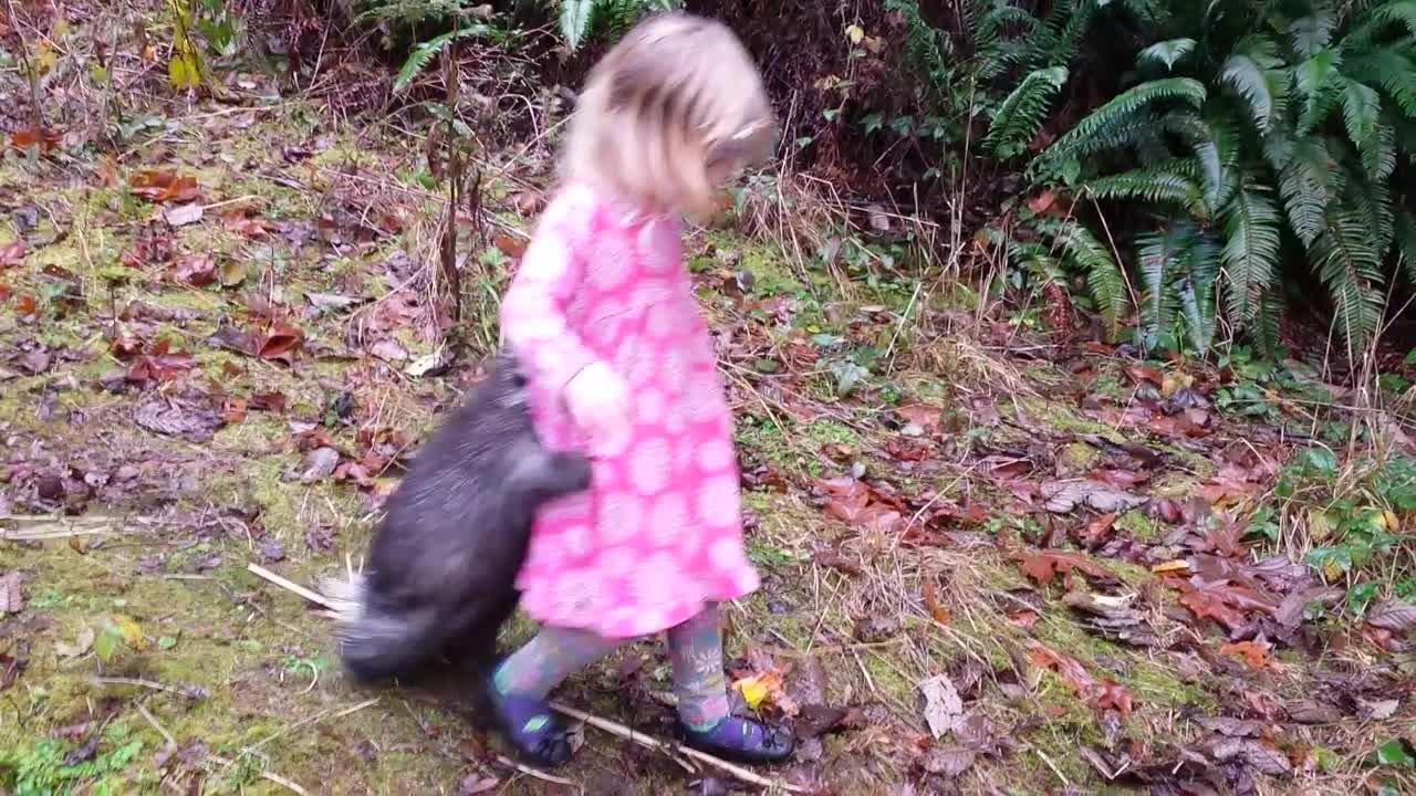 Porcupine clings to little girl's leg in hysterical viral video