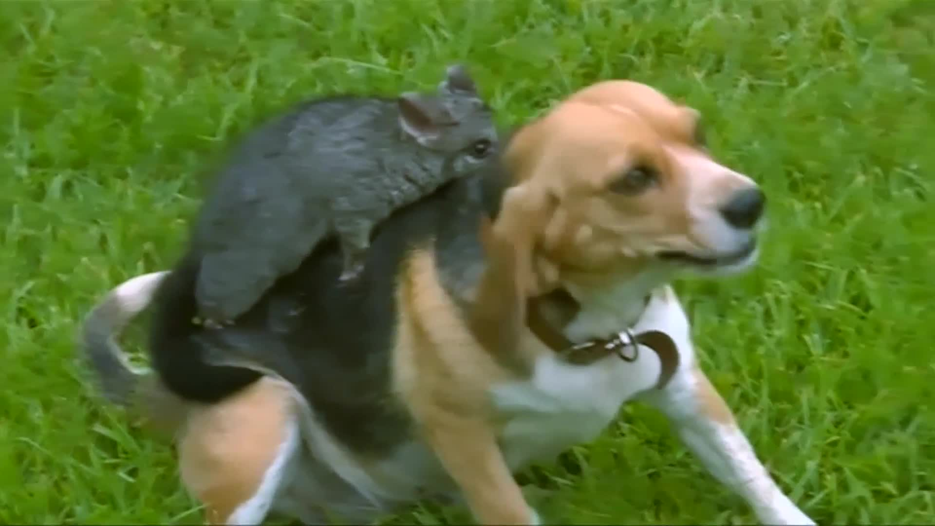 Beagle Adopts Baby Possum And It's As Cute As You Think It Is