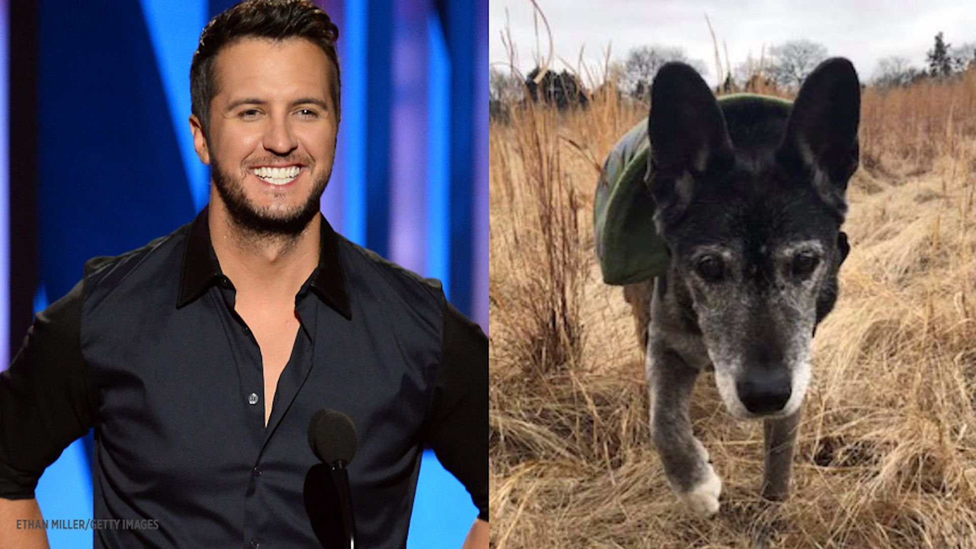 Luke Bryan's recently adopted 18-year-old shelter dog has died
