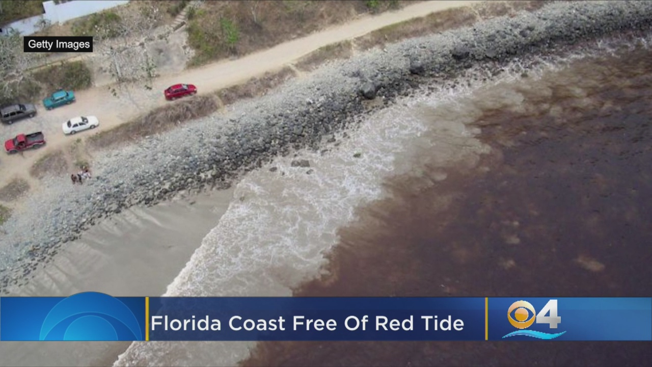 Florida's Toxic 'Red Tide' Algae Bloom Is Not Showing Up In Tests