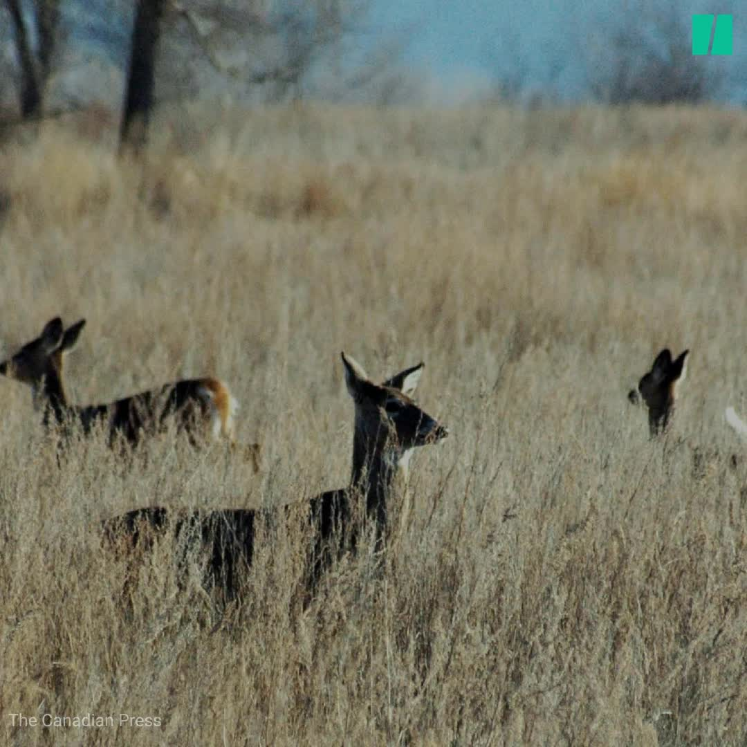 'Zombie Deer Disease': What You Should Know About The Condition