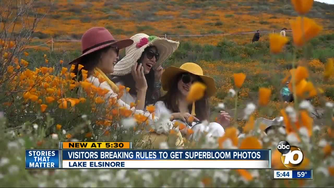 California 'Super Bloom' Wildflower Fields Close After Visitors Trample Poppies