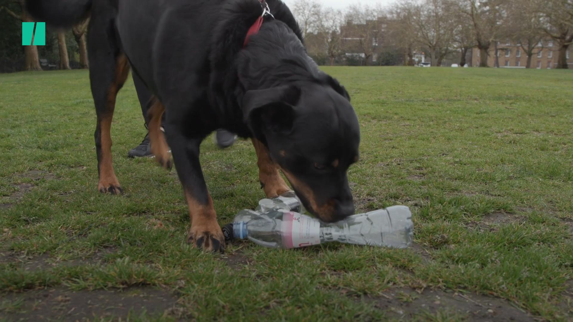 Meet Maggie The Litter-Picking Dog