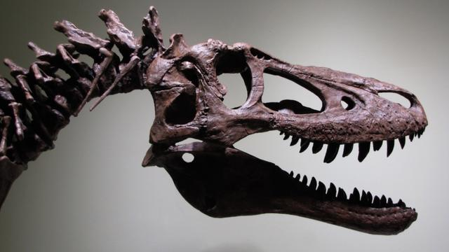 Weird, Odd and Bizarre News - Ever Want to Buy a Baby T-Rex Skeleton? It Could be Yours For $2.95 Million
