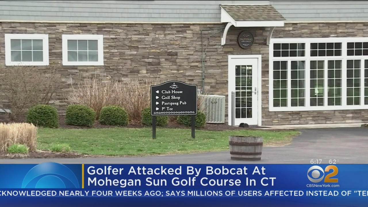Rabid Bobcat Jumps On Golfer, Gets Beaten By Rest Of Foursome