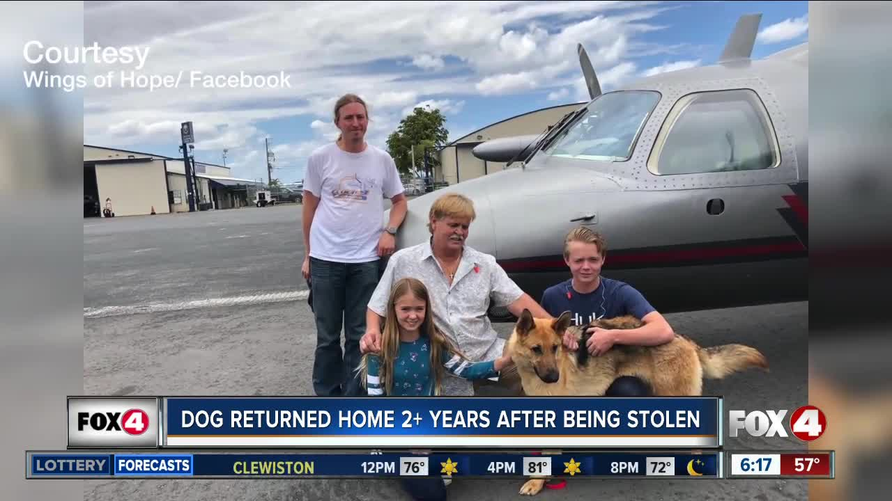 'Stolen' dog found in Colorado returns to Florida family 2 years later