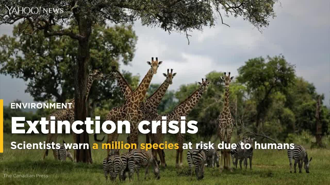Are We Heading Toward Extinction?