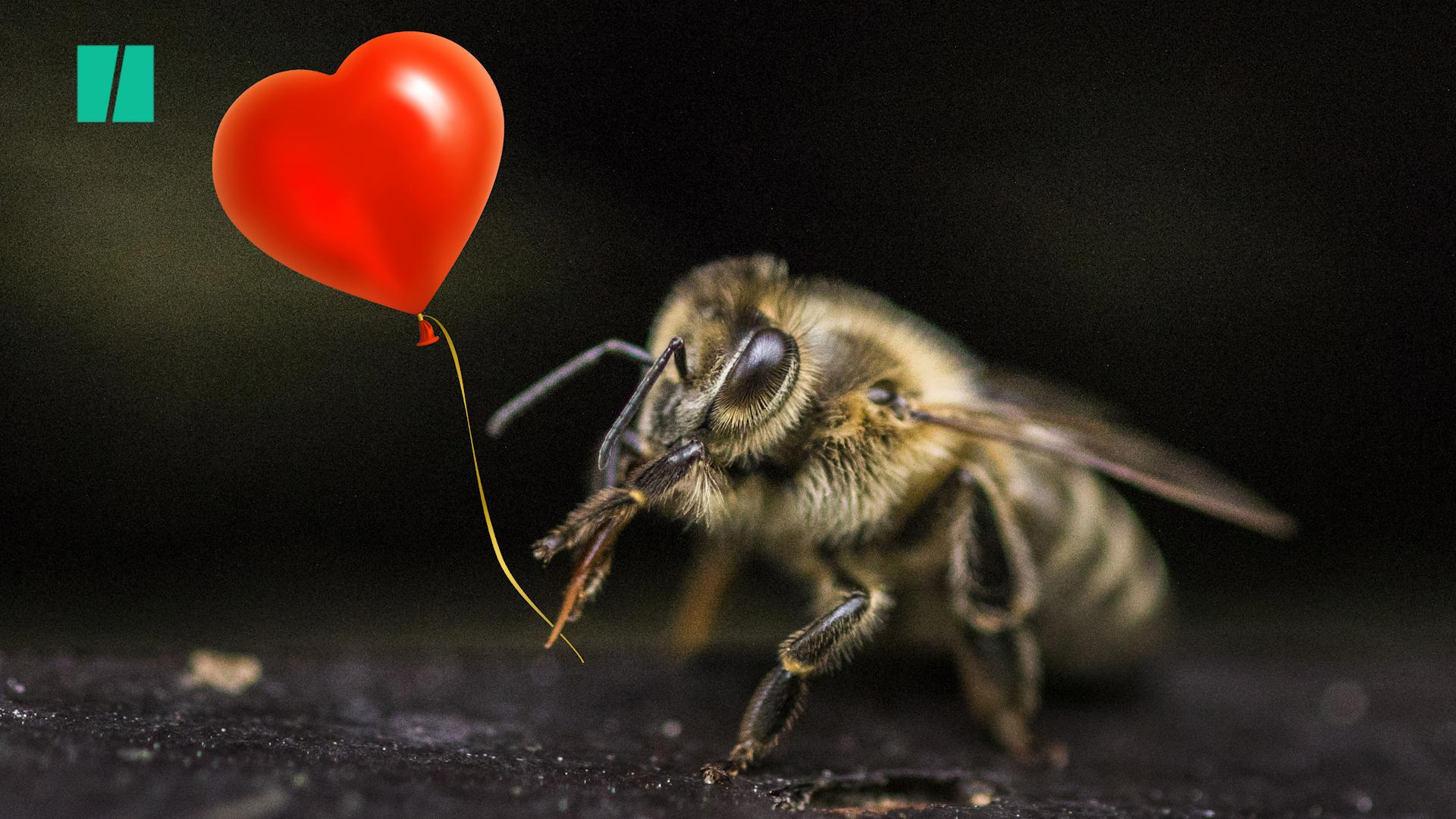 Why We Need To Be Kinder To Bees
