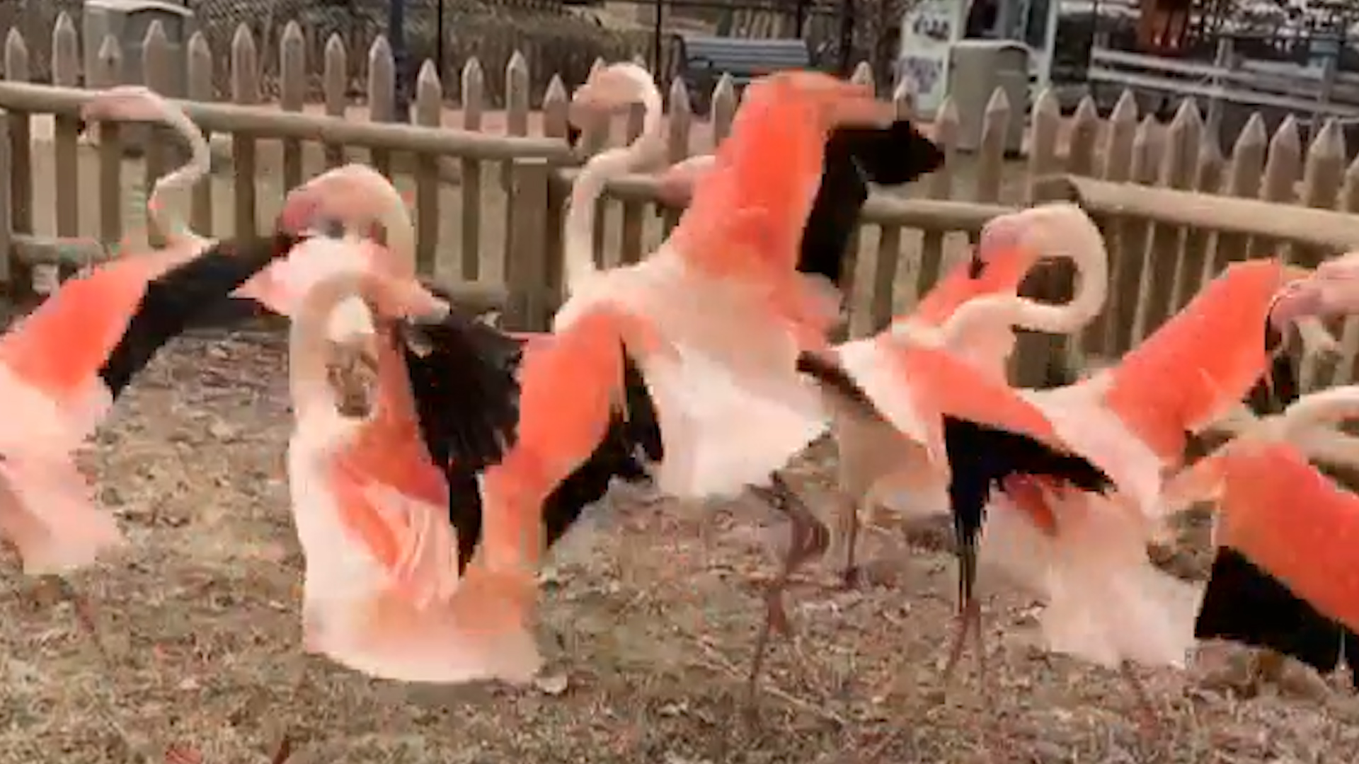 Zoo Forced To Euthanize Flamingo After Child Hits It With Rock