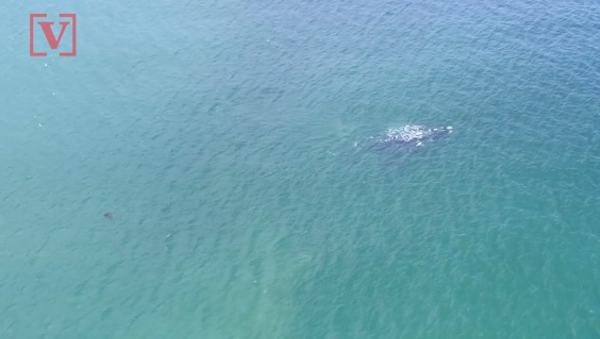 So Many Dead Whales Are Washing Up On The West Coast That The NOAA Is Pleading For Help