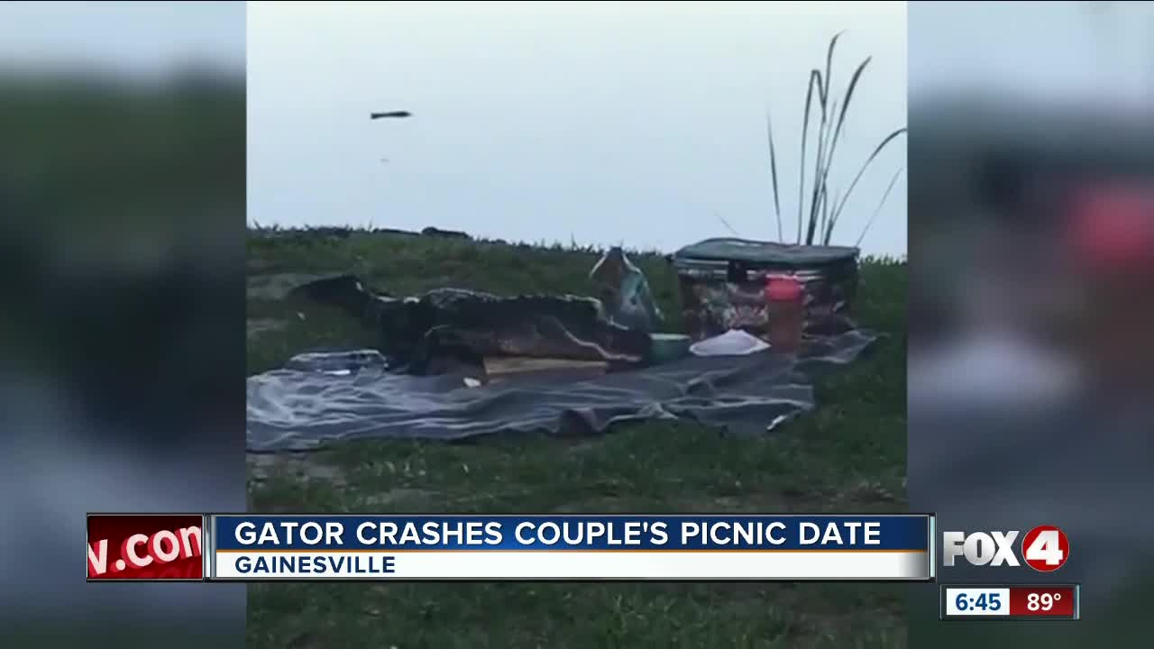 Gator Eats Whole Block Of Cheese And Bowl Of Guacamole After Crashing Picnic Date