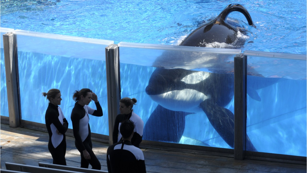 Canada Passes Legislation To Ban Whales, Dolphins In Captivity