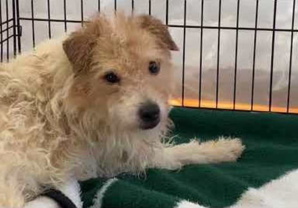 Nearly 200 dogs rescued from New Jersey home of prominent breeder