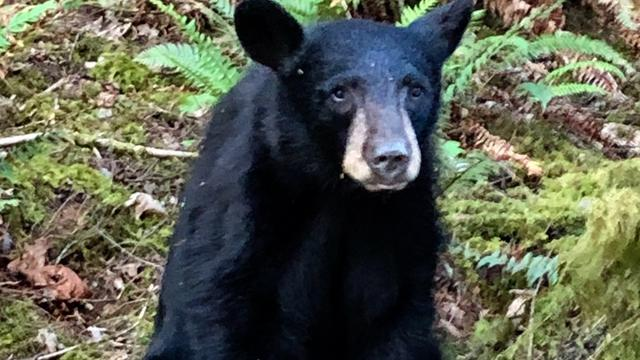 Young Black Bear Euthanized After Tourists Fed, Took Selfies With It