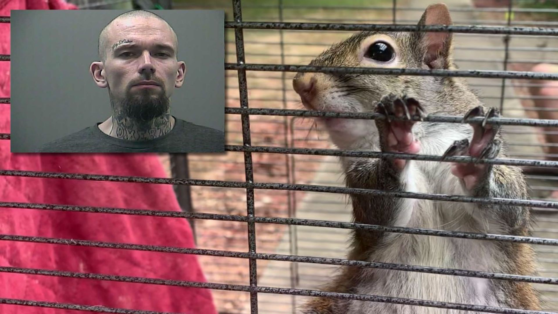 Alabama Man On The Lam Insists He Didn't Give Meth To 'Attack Squirrel'