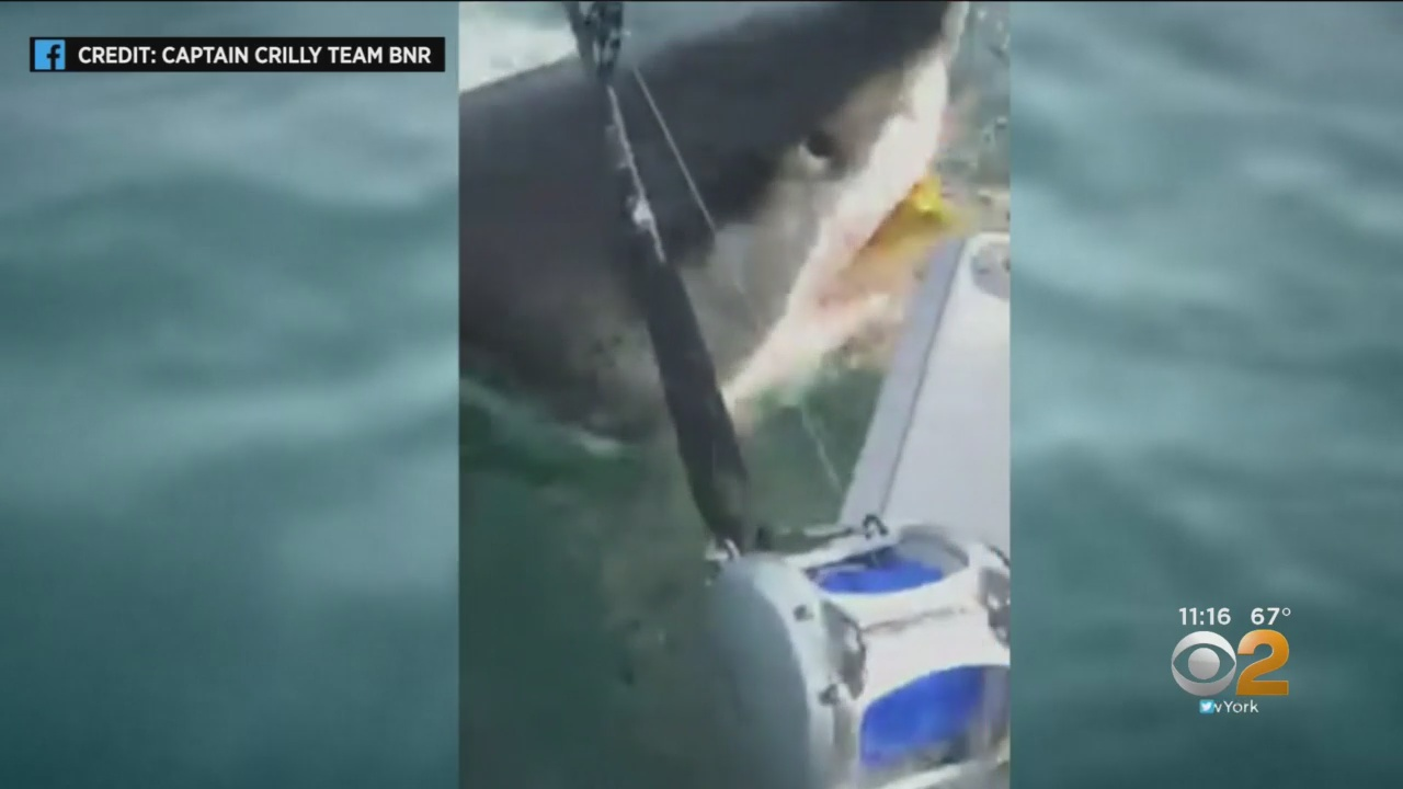 Humongous Great White Shark Pays 'Jaws'-Like Visit To Fishing Boat