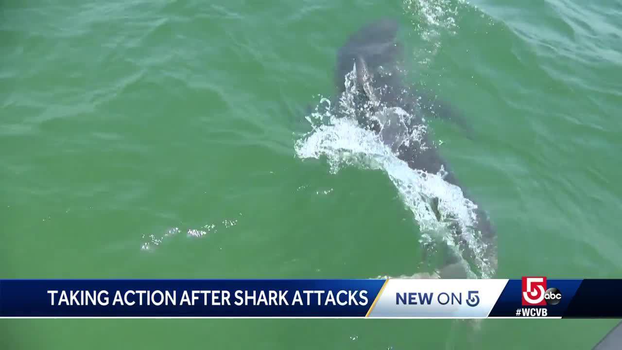 Massive 13-foot shark spotted alarmingly close to Florida beach