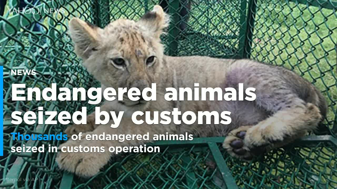 More Than 10,000 Wild Animals Seized In Massive Interpol Anti-Smuggling Operation