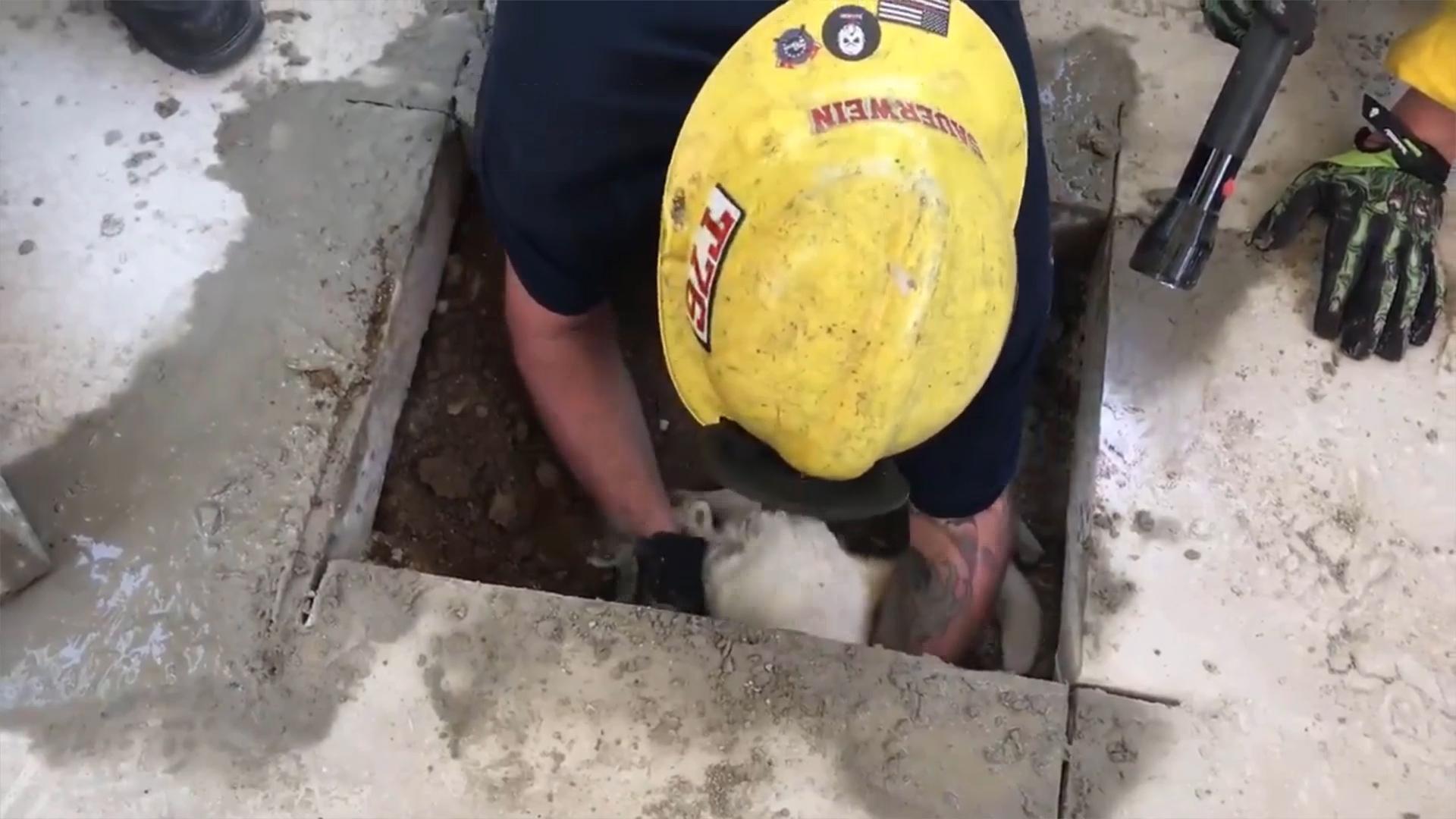 Le sauvetage extraordinaire d'un chien coincé sous une terrasse