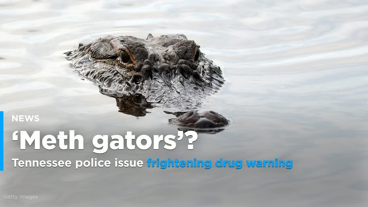 Flushing Drugs Probably Won't Lead To 'Meth Gators.' But It's Still A Bad Idea.