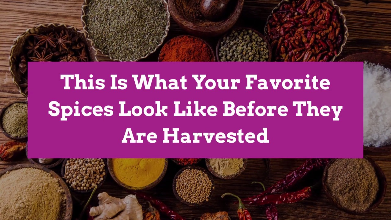 This Is What Your Favorite Spices Look Like Before They Are Harvested