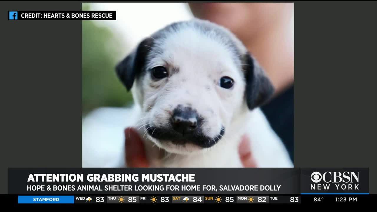 This Tiny Puppy's 'Mustache' Is Probably Better Than Yours
