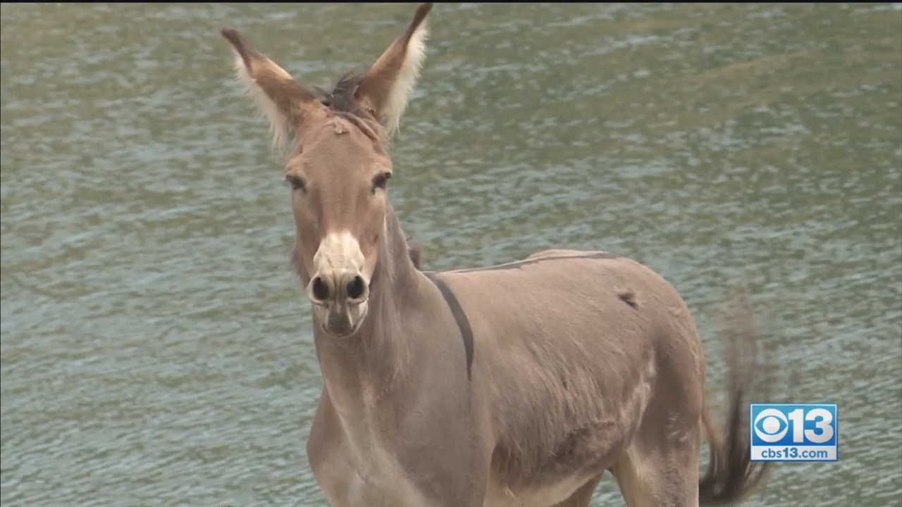 Hillary The Donkey Finally Rescued After 2 Years Stranded Alone On Island