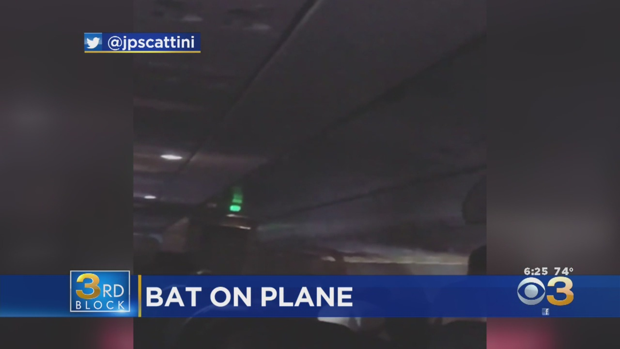 SEE IT: Bat stows away on Spirit Airlines plane, terrorizes cabin before being trapped in bathroom