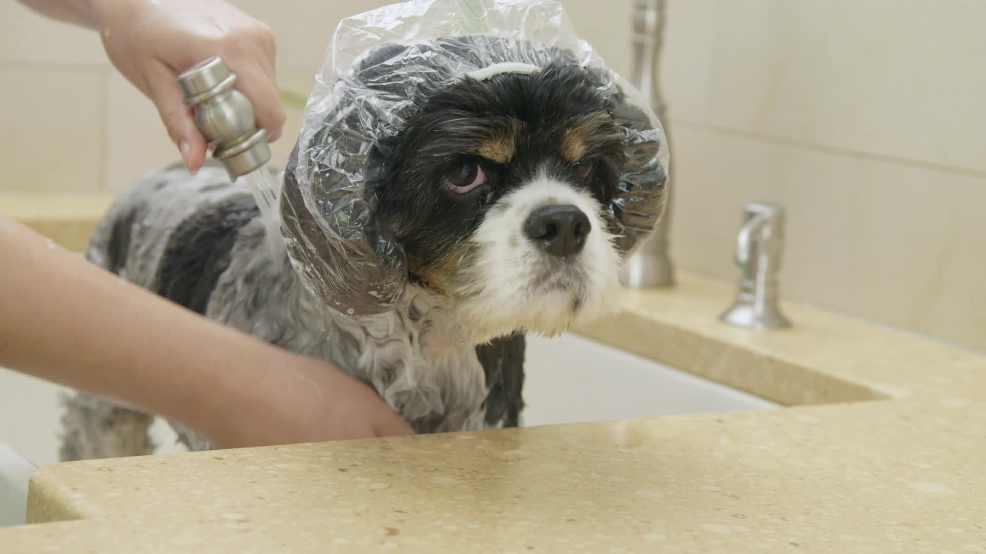 Home Hacks: Discover how easy dog care can be