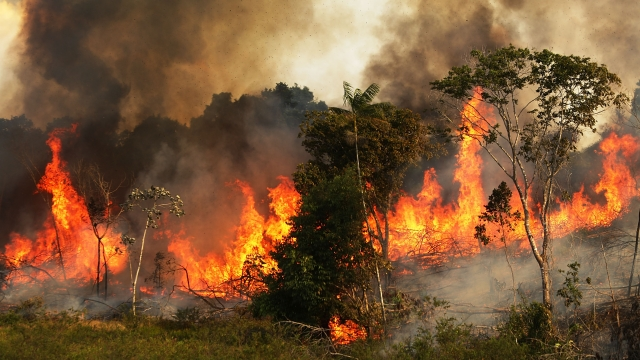 Brazil's Amazon Fires Highlight The Threat Of Deregulation Amid Climate Change