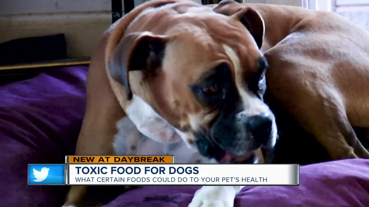 Feeding Your Pets These People Foods Can Be 'Toxic'