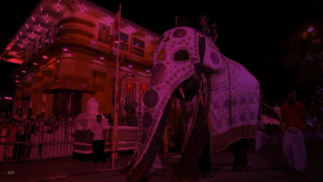 Emaciated elephant forced to perform during religious festival in Sri Lanka has died