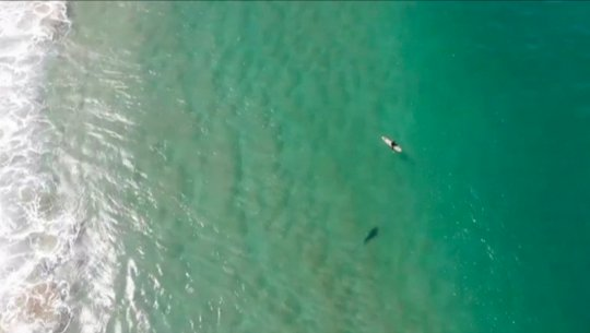 Drone footage shows scary moment shark approaches unsuspecting surfer