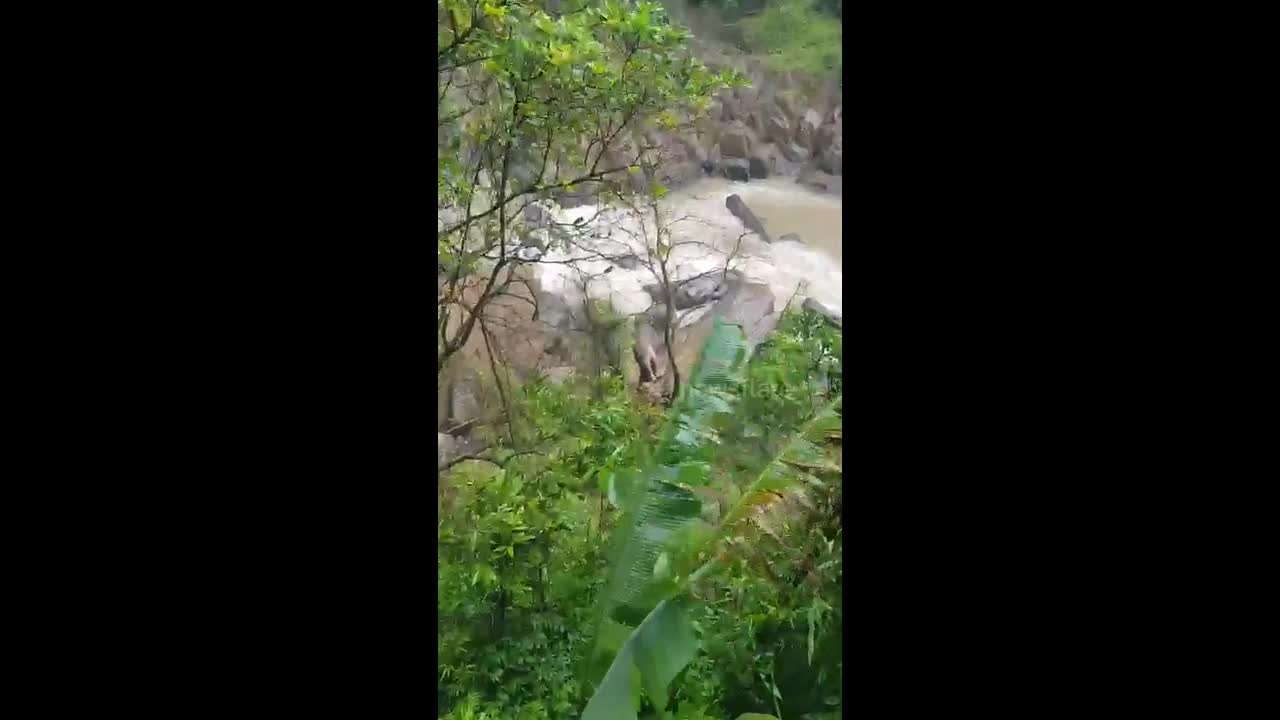 11 elephants plunge off waterfall to their deaths after trying to save baby
