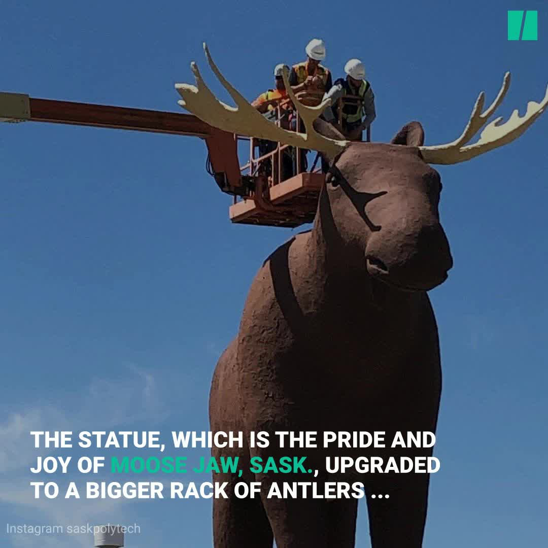 Mac The Moose Becomes Tallest Moose Statue Once Again