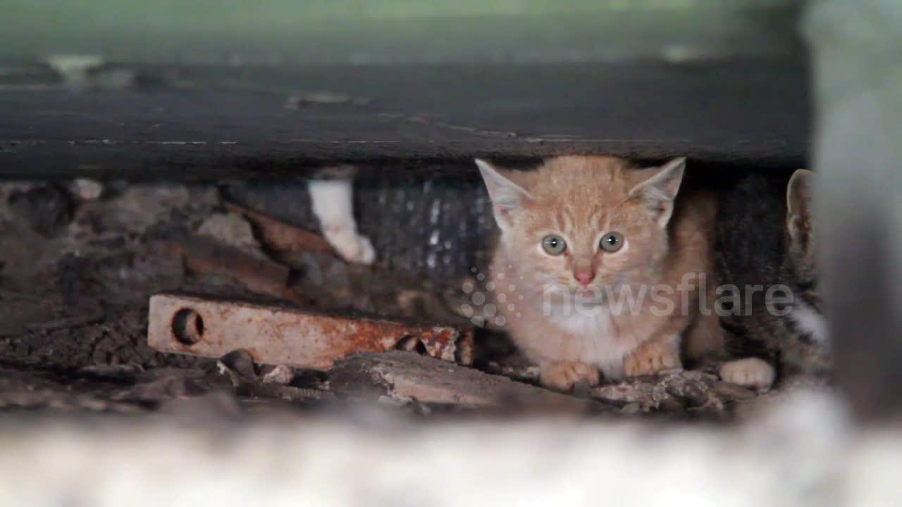 Stray Dog Found Keeping Tiny Kittens Warm By Roadside On Frigid Night