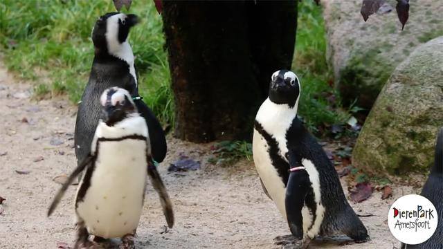 People Cheer On Same-Sex Penguin Couple Who Stole An Egg To Parent As Their Own