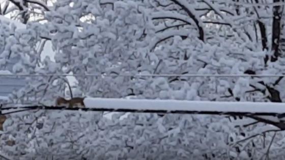 Des secteurs de Terre-Neuve ont reçu plus de 70 centimètres de neige