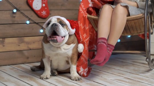 Holiday foods that are actually toxic for your dog