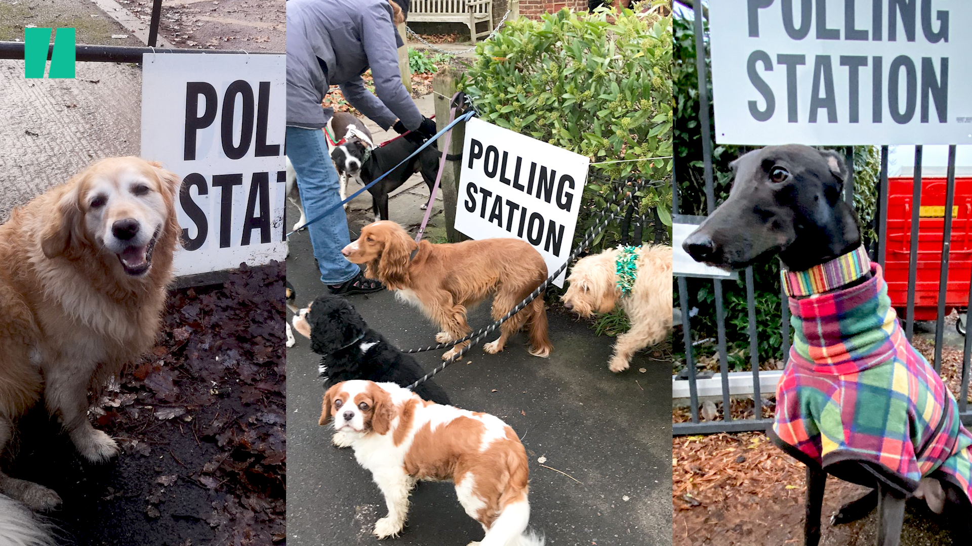 7 Dogs* At Polling Stations Plus A Few Having A Politics-Induced Existential Crisis