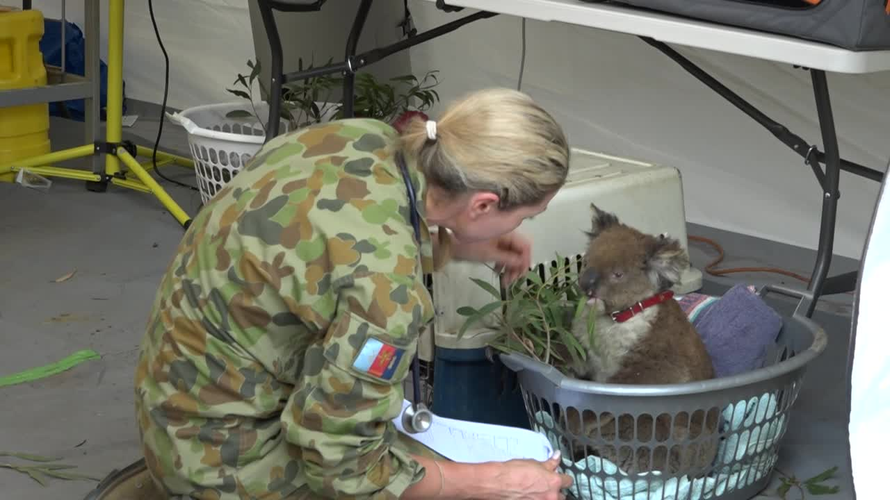 'From Heartbreak Comes Hope:' Koala Rescuers Share Moving Recovery Stories