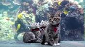 'Purrfect field trip' – shelter kittens visit U.S. aquarium closed to visitors