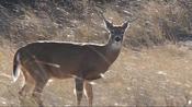 Deadly virus killing deer across Hudson Valley