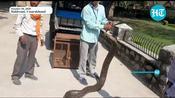 Watch: 16-feet-long Burmese python rescued by Uttarakhand Forest dept