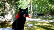 Are Black Cats Lucky?