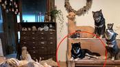 日本雕刻家的狗狗喜歡混入動物雕塑作品中!