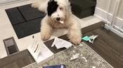 Owner Scolds Pet Dog When She Destroys her Book