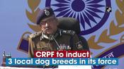 CRPF to induct 3 local dog breeds in its force