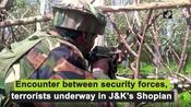 Encounter between security forces, terrorists underway in J-K's Shopian