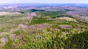 High altitude drone shows devastation from gypsy moth caterpillars